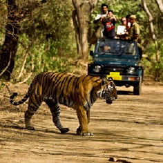 Wildlife Tour in India
